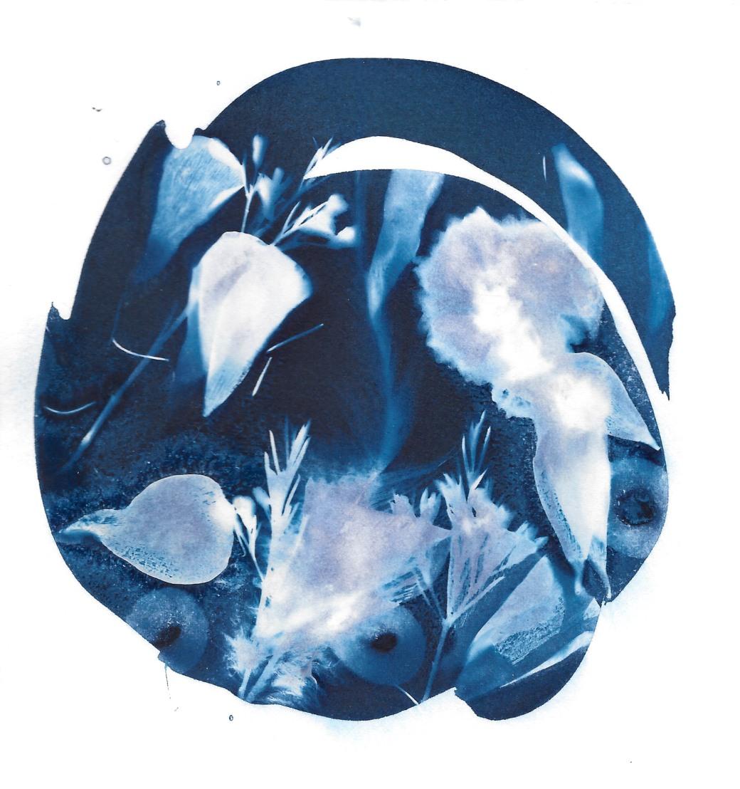 Cyanotype flowers 7